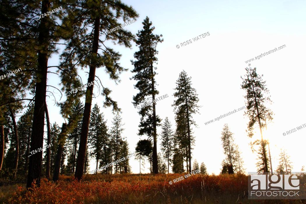 Stock Photo: Wind damage in the woods in Mead, Washington, USA.