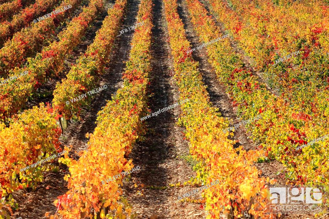 Stock Photo: Autumnal vineyards of the Luberon, Vaucluse, Provence-Alpes-Côte d'Azur, France.
