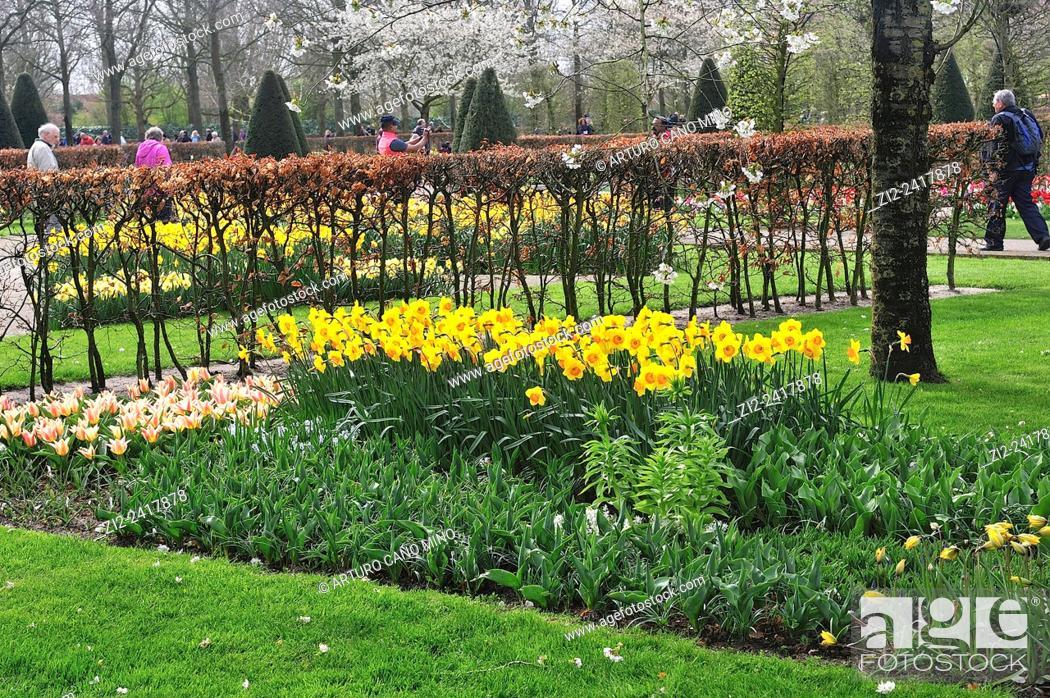 Imagen: Tulips and narcissus in blossom. Keukenhof, Lisse, the Netherlands.