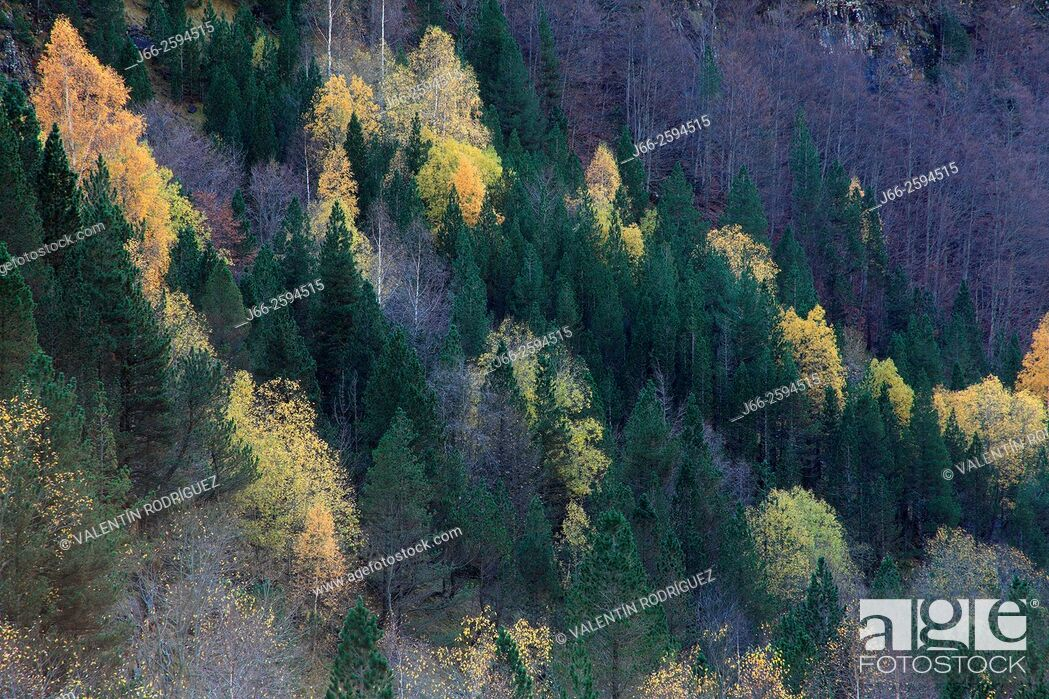 Imagen: Forested landscape in the valley of Ordesa. Ordesa National Park. Huesca.