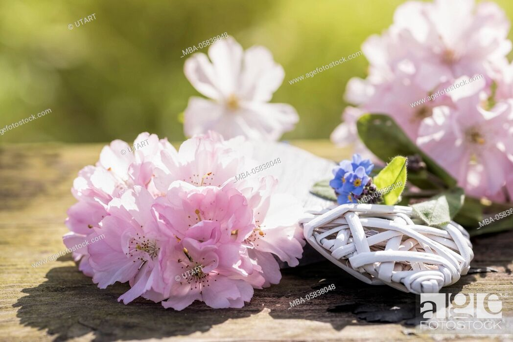 Stock Photo: Photography in the back light. White heart on old wood bank with pink cherry flowers and forget-me-not decorates.