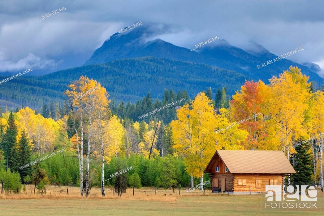 Stock Photo: Small log cabin nestled among a grove of aspen trees in autumn foliage, North Fork Flathead River Valley Montana USA.