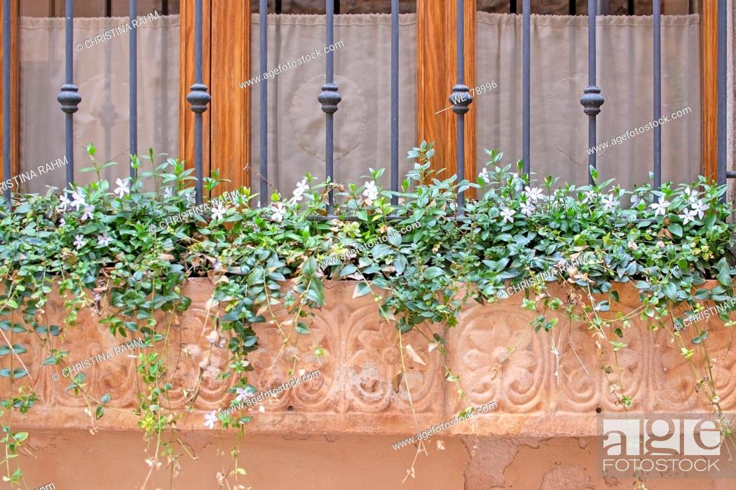 Stock Photo: Beautiful terracotta flowerpot with blossoming plants and wrought iron on window in Valldemossa Mallorca.