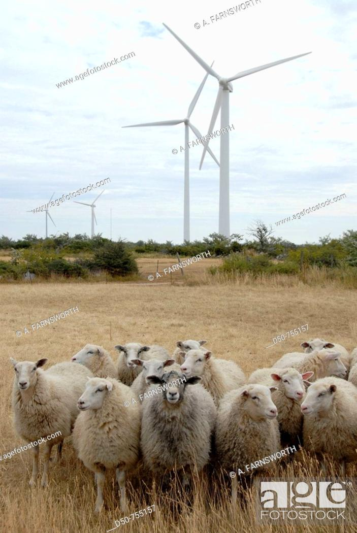 Stock Photo: Electricity generating windmill, windfarm, sheep. Näsudden, Gotland, Sweden.
