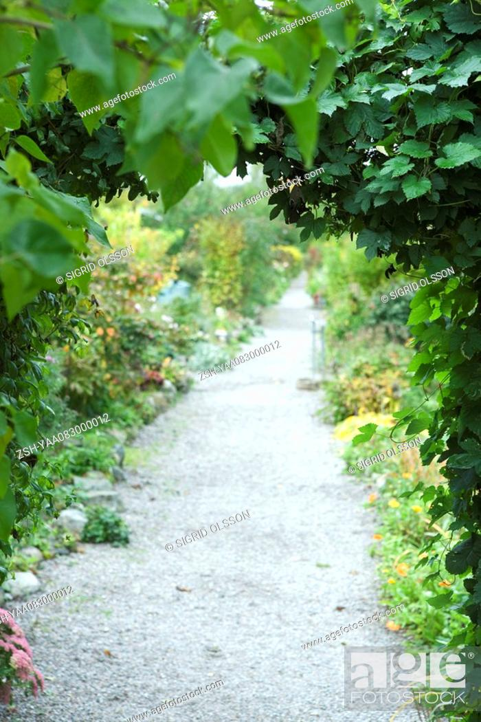 Stock Photo: Footpath lined with lush foliage.