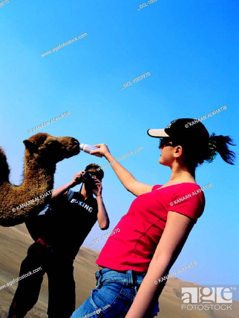 Stock Photo: Western tourists feeding a baby camel in the desert of the United Arab Emirates.