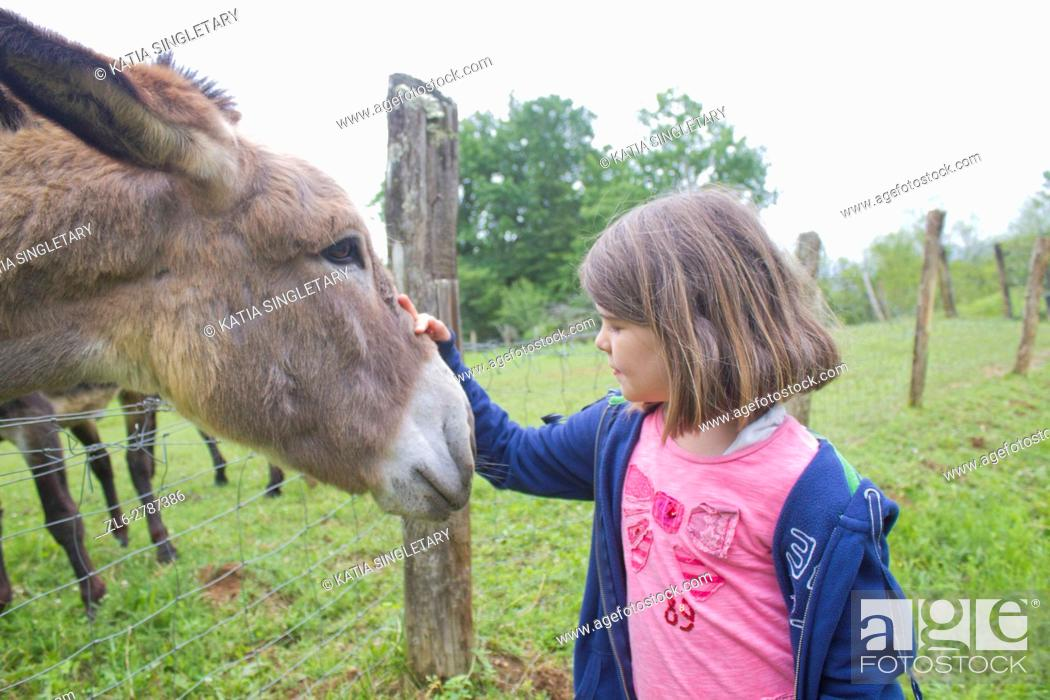 Stock Photo: Beautiful close up of a dark blond hair caucasian little girl in blue jacket and jeans feeding donkey on a farm.