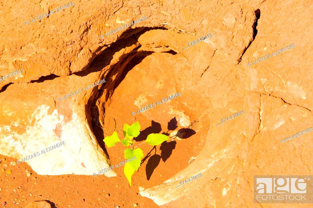 Imagen: little green plant in desert.