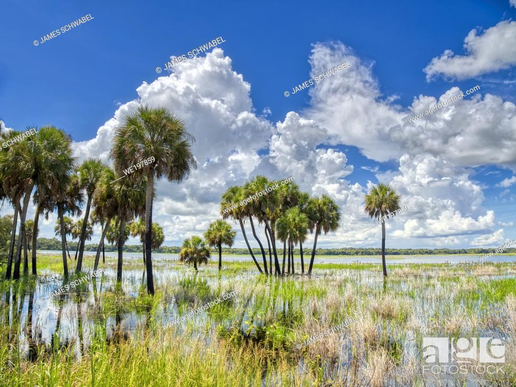 Stock Photo: Flooded Big Flats area of Myakka River State Park in Sarasota Florida USA.