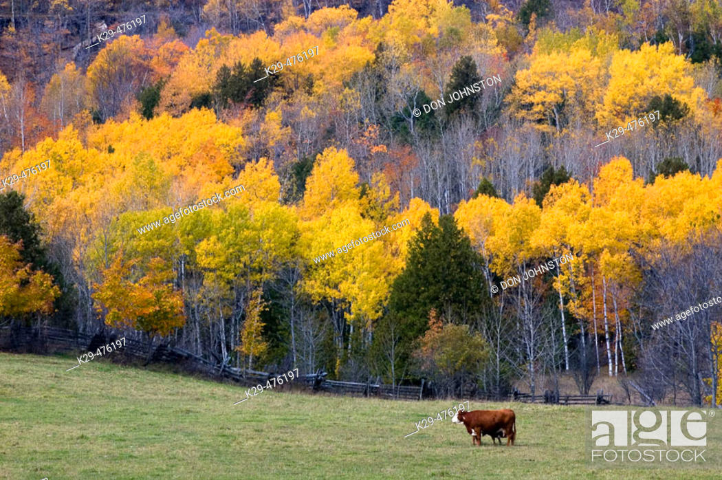 Stock Photo: Pasture with cow and hardwood hillside. Manitoulin Island. Ontario. Canada.