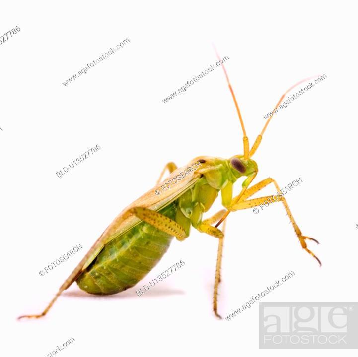 Stock Photo: Close-up of a grasshopper.