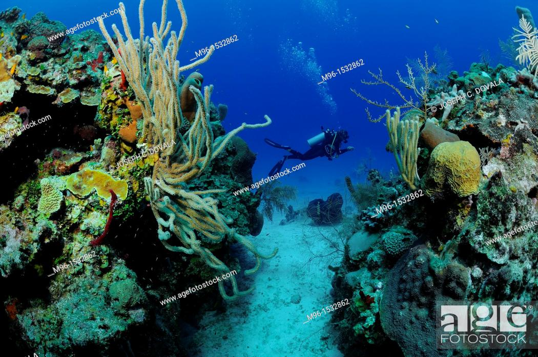 Stock Photo: Scuba diver swims by cut in reef, Roatan, Bay Islands, Honduras.