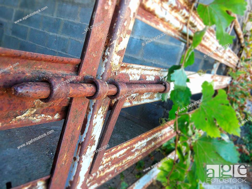 Stock Photo: Vines entangled in an iron fence, Miajadas, Extremadura, Spain.