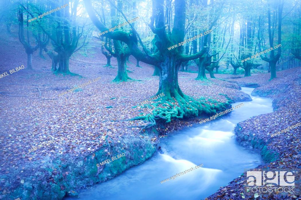 Stock Photo: Otzarreta beechwood and river. Gorbeia Natural Park. Biscay, Basque Country, Spain. Europe.