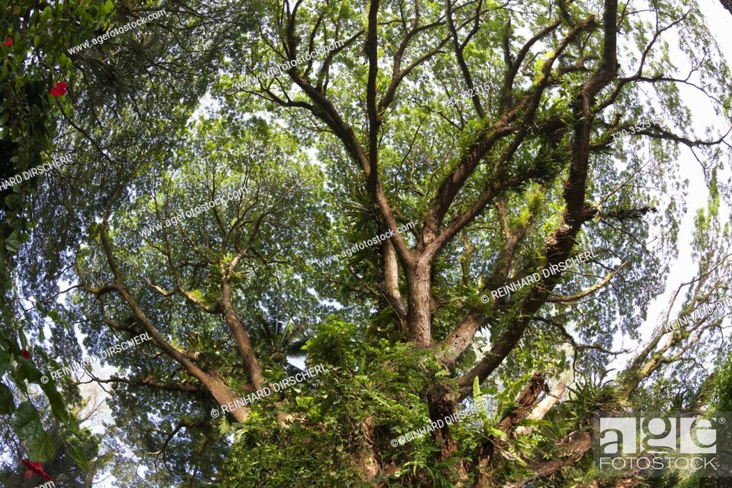 Imagen: Vegetation of Kimbe Bay, New Britain, Papua New Guinea.
