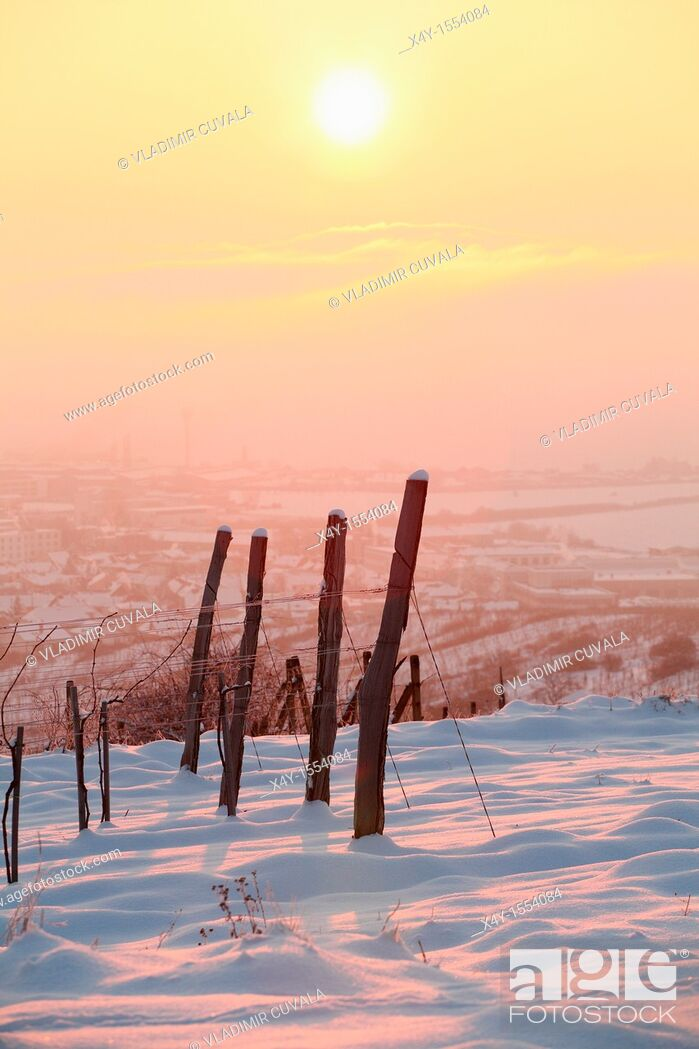 Stock Photo: Vineyards near Modra Slovakia in early morning sun.