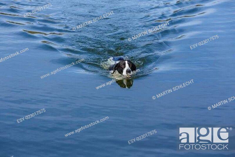 Stock Photo: Schwimmen.