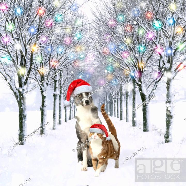 Stock Photo: Dog and Cat wearing Christmas hats in tree-lined avenue in snow, winter.
