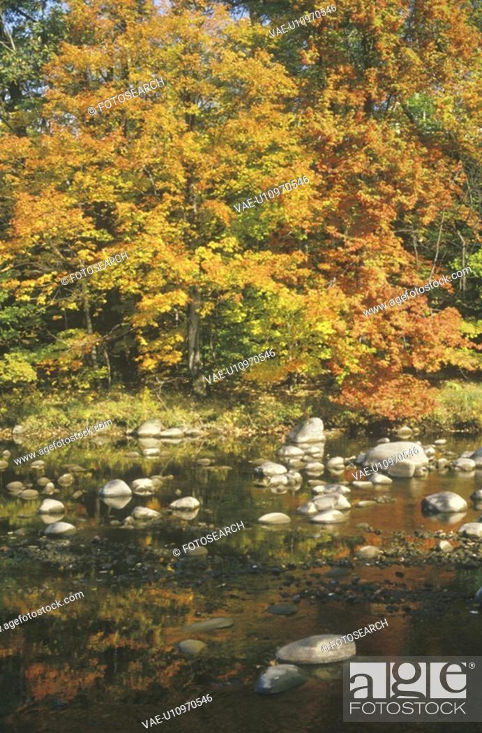 Stock Photo: Autumn Leaves By a Stream.