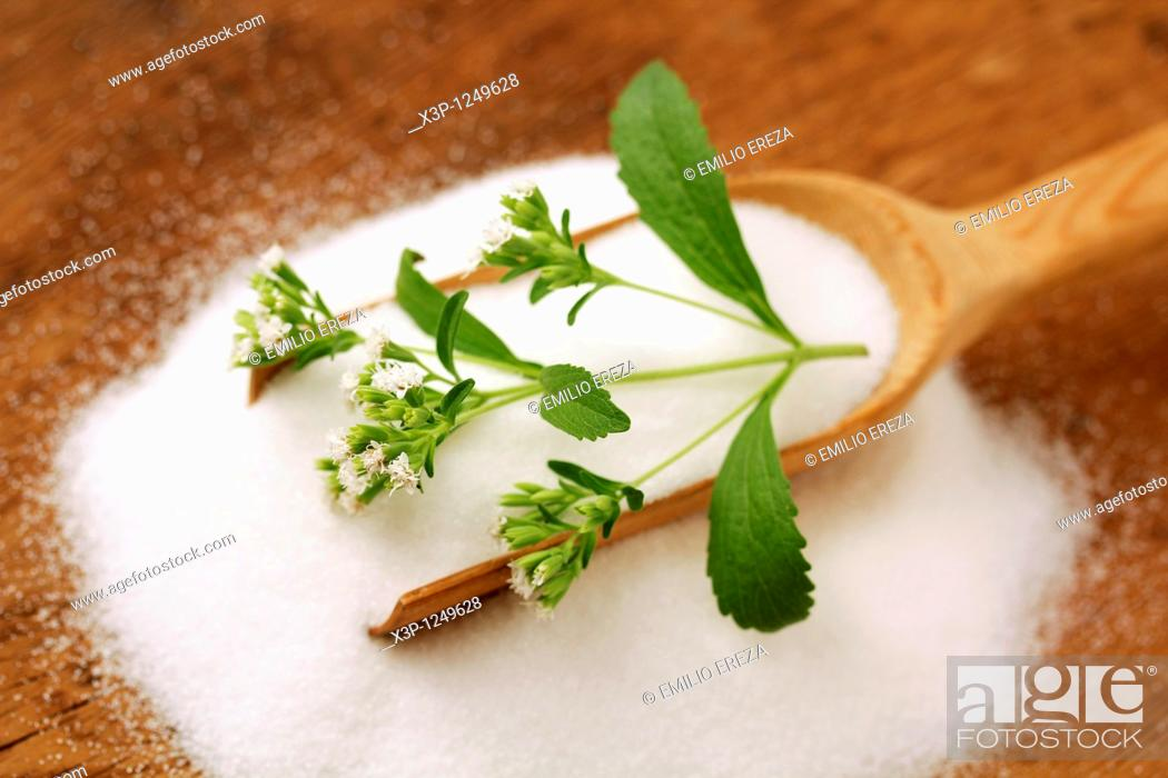 Stock Photo: Sweet herb  Stevia rebaudiana.