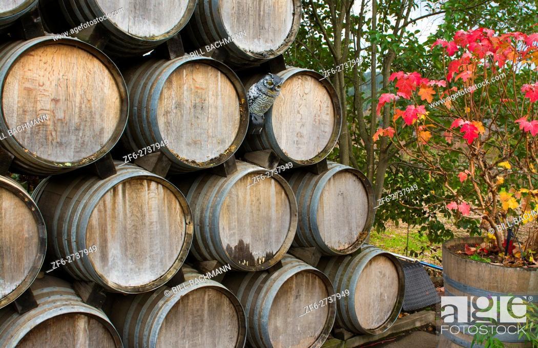 Stock Photo: Sonoma Valley California Kunde Winery barrels of wine winery vineyards abstract Napa Valley Kenwood CA.