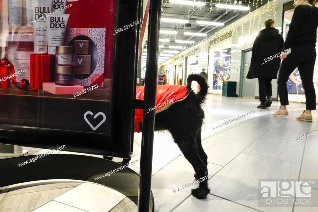 Imagen: Stockholm, Sweden A dog with a red sweater waits outside the pharmacy or apotek.