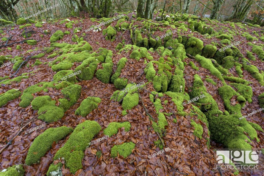 Stock Photo: Forest in Urbasa, Navarra, Spain.