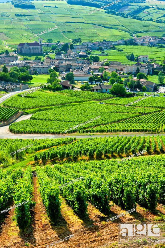Stock Photo: vineyards near Fuisse, Burgundy, France.
