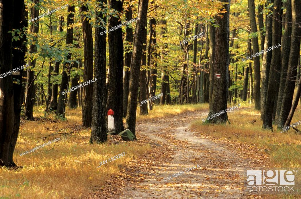 Stock Photo: Red marked walking path in the woods of Male Karpaty, Slovakia.