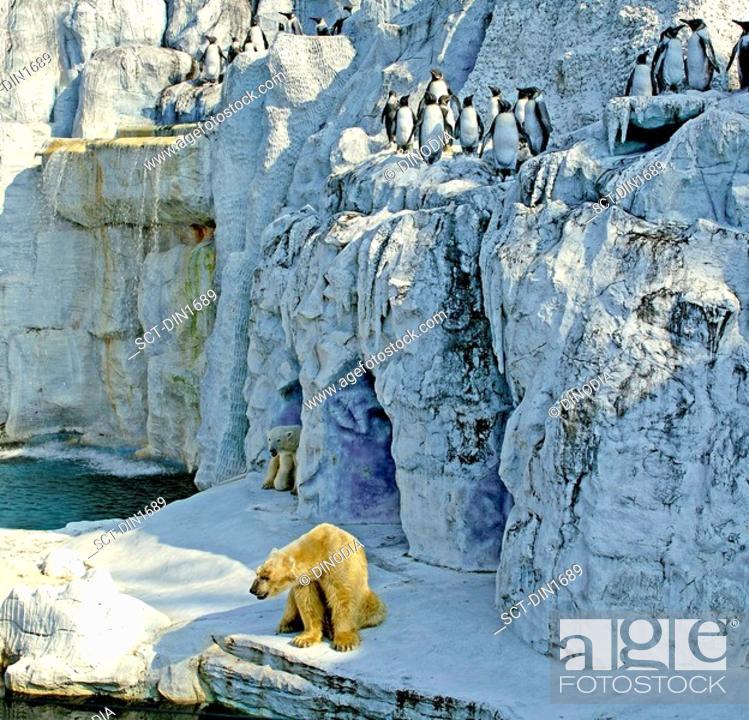 Stock Photo: Two Polar Bear s and Penguins Safari world Bangkok , Thailand , South East Asia.