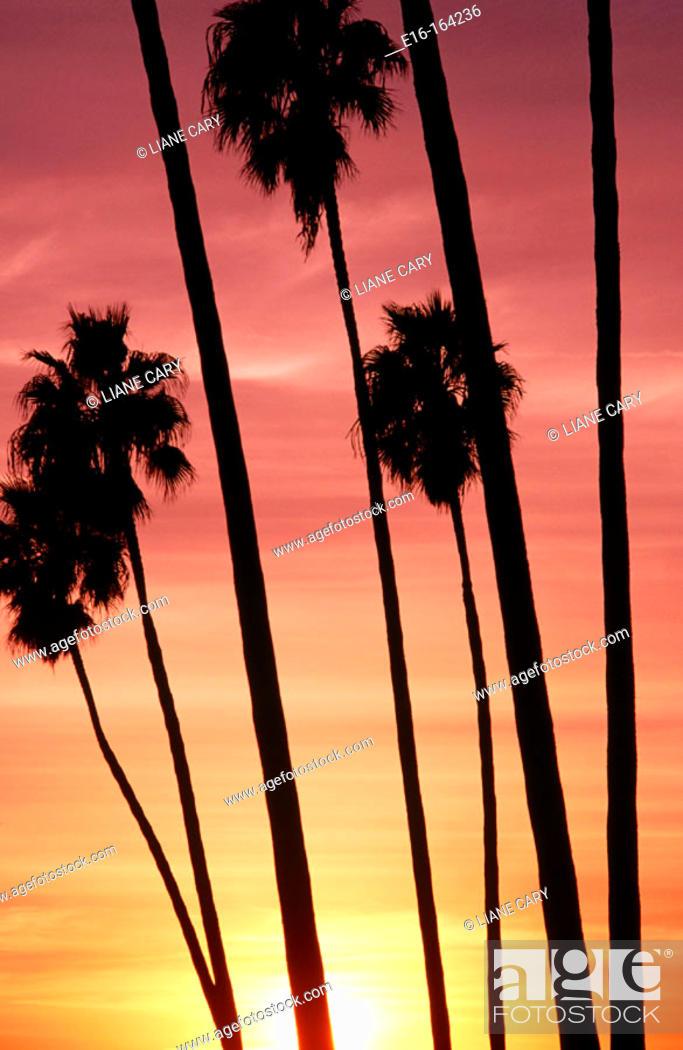 Stock Photo: California sunset.