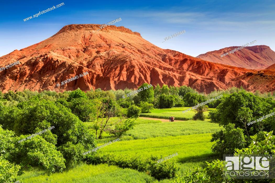 Stock Photo: Agriculture. Dades Valley, Dades Gorges, High Atlas. Morocco, Maghreb North Africa.
