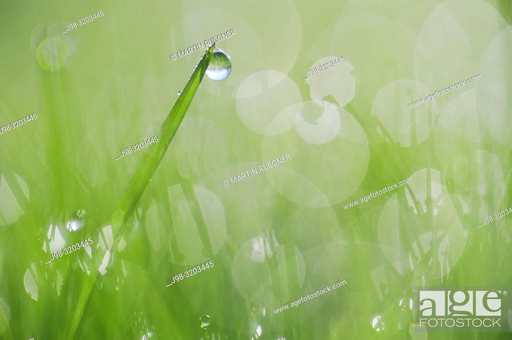 Stock Photo: Dew on grass selective focus, close up. Bavaria, Germany, Europe.
