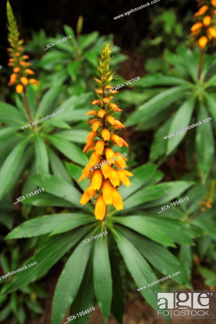 Stock Photo: typical plant in Ruiz ravine Tenerife island Spain.