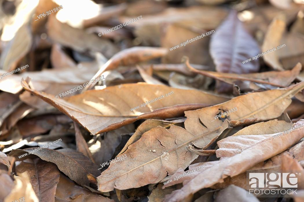 Imagen: Dry leaves on the ground a winter day. Horizontal shot with natural light.