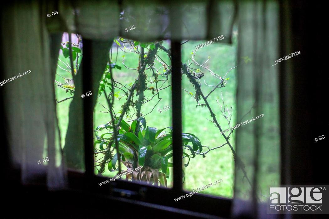 Stock Photo: Guatemala, Alta Verapaz, bromelia through window curtain.