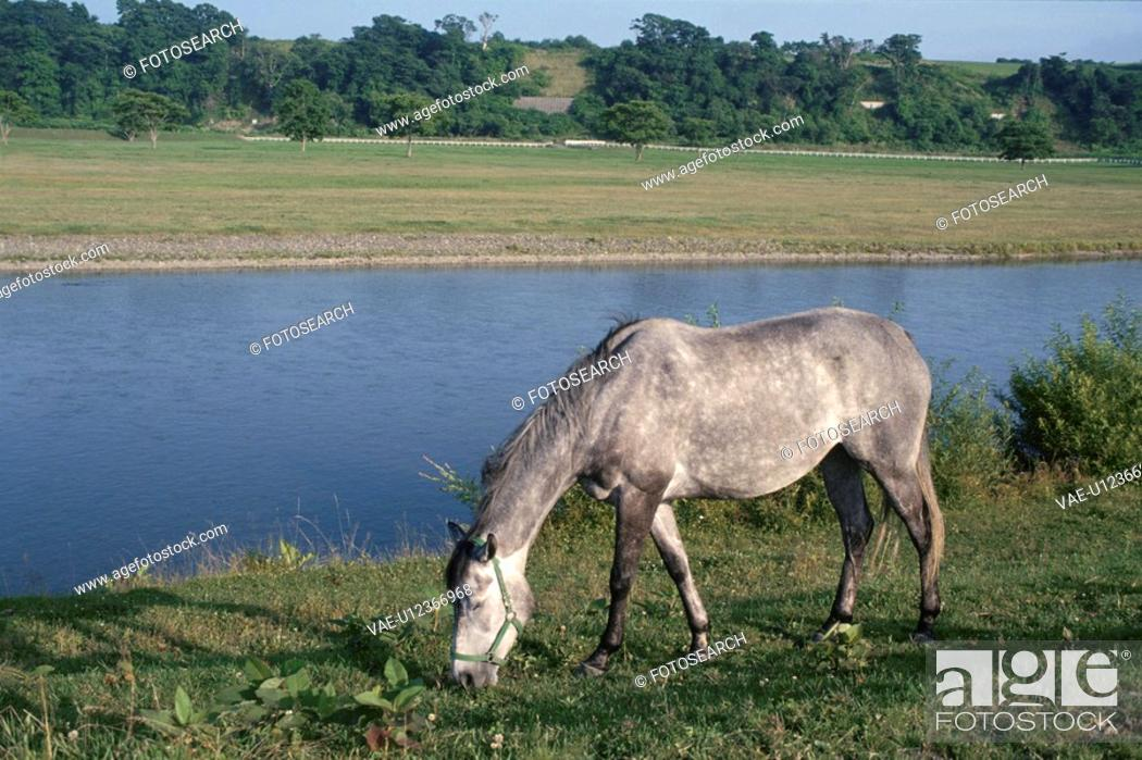 Stock Photo: A Horse On The River Bank In Hokkaido.
