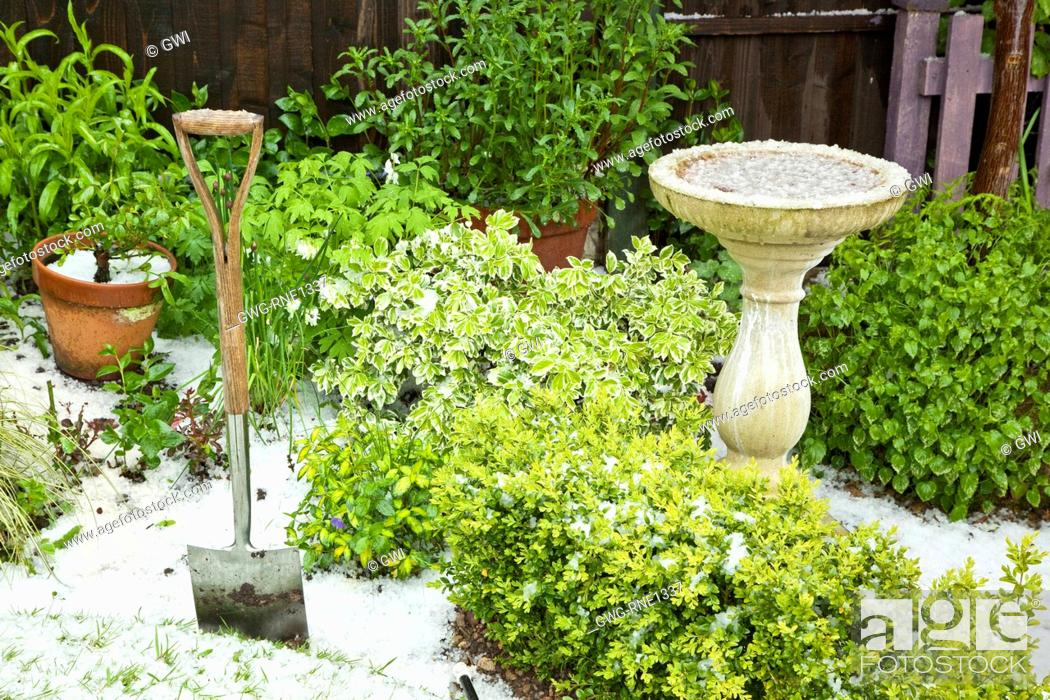 Young Foliage Of Mature Evergreen Shrubs Bird Bath Covered In Hail