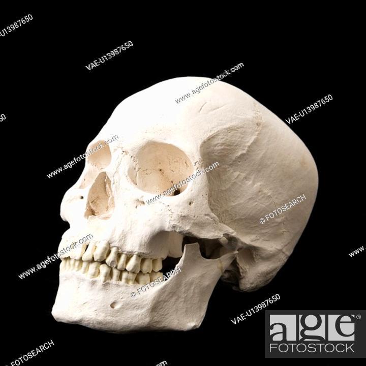 Stock Photo: Human skull with teeth on black.