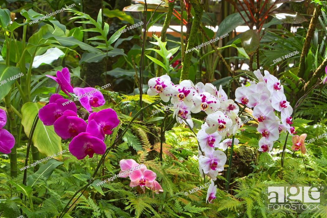 Stock Photo: Hawaï , Big Island , Hamakua coast , Tropical botanical garden , Orchid.