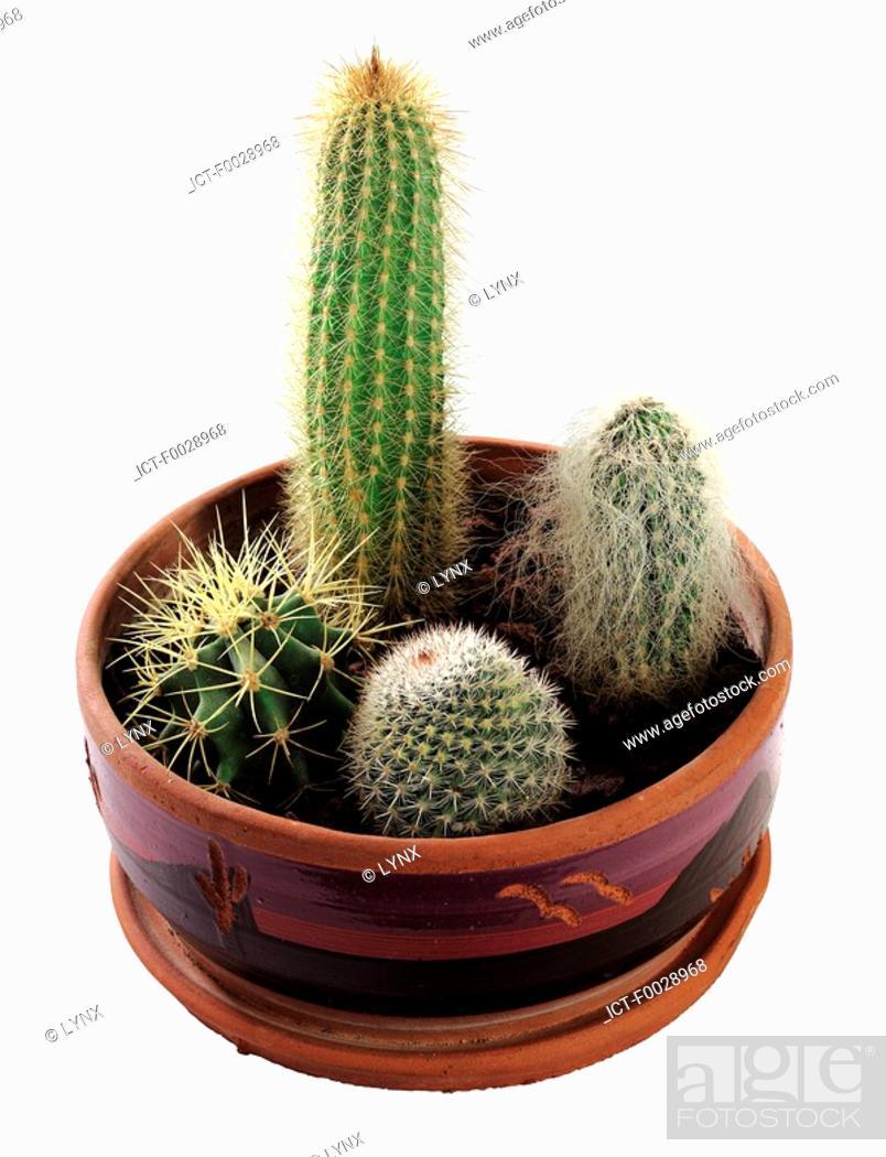 Stock Photo: World symbols: Cactus Mexico.