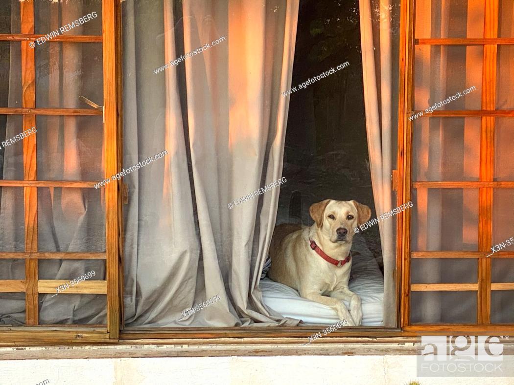 Stock Photo: Dog Through a Window in Namibia.