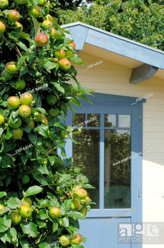 Stock Photo: Apple tree and garden house.