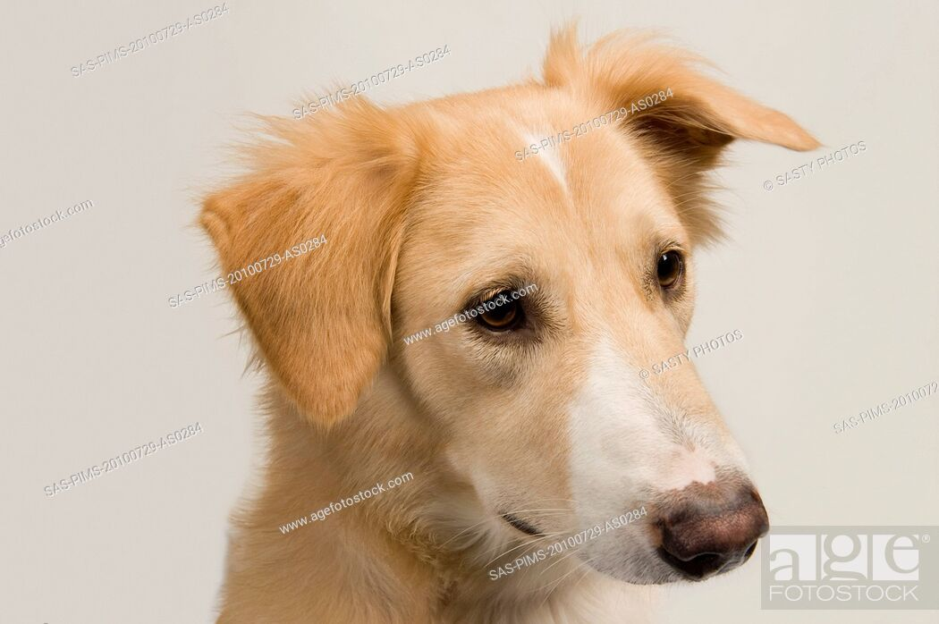 Stock Photo: Close-up of a dog.