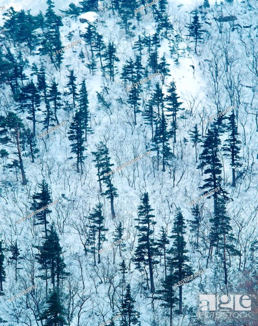 Stock Photo: mountain, nature, tree, snow, scenery, forest, winter.