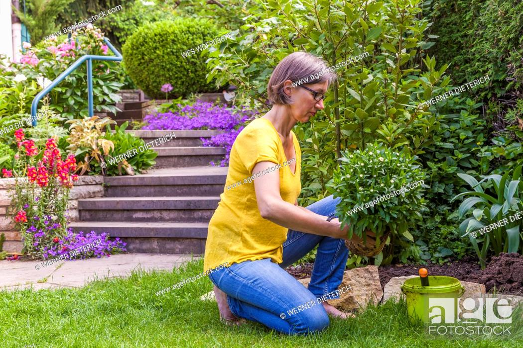 Stock Photo: Woman planting marguerite in garden.