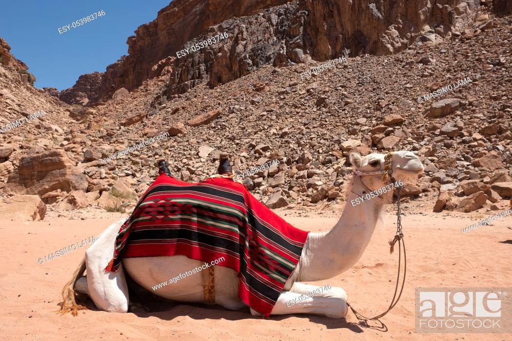 Stock Photo: Dunes in Wadi Rum desert, Jordan.
