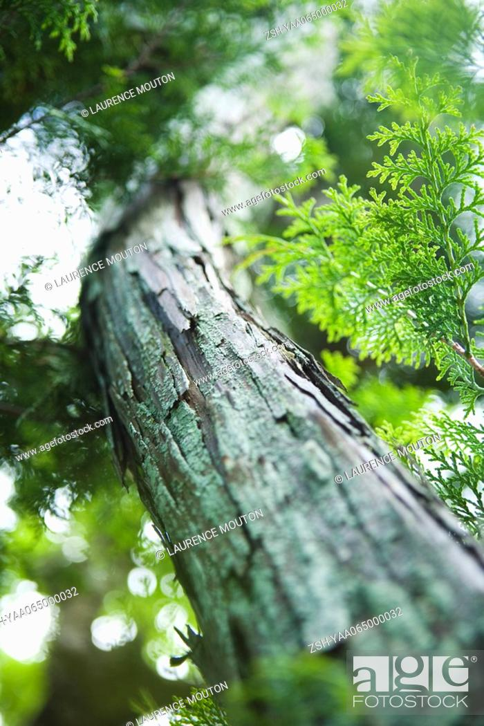 Stock Photo: Tree and foliage, low angle view, close-up.