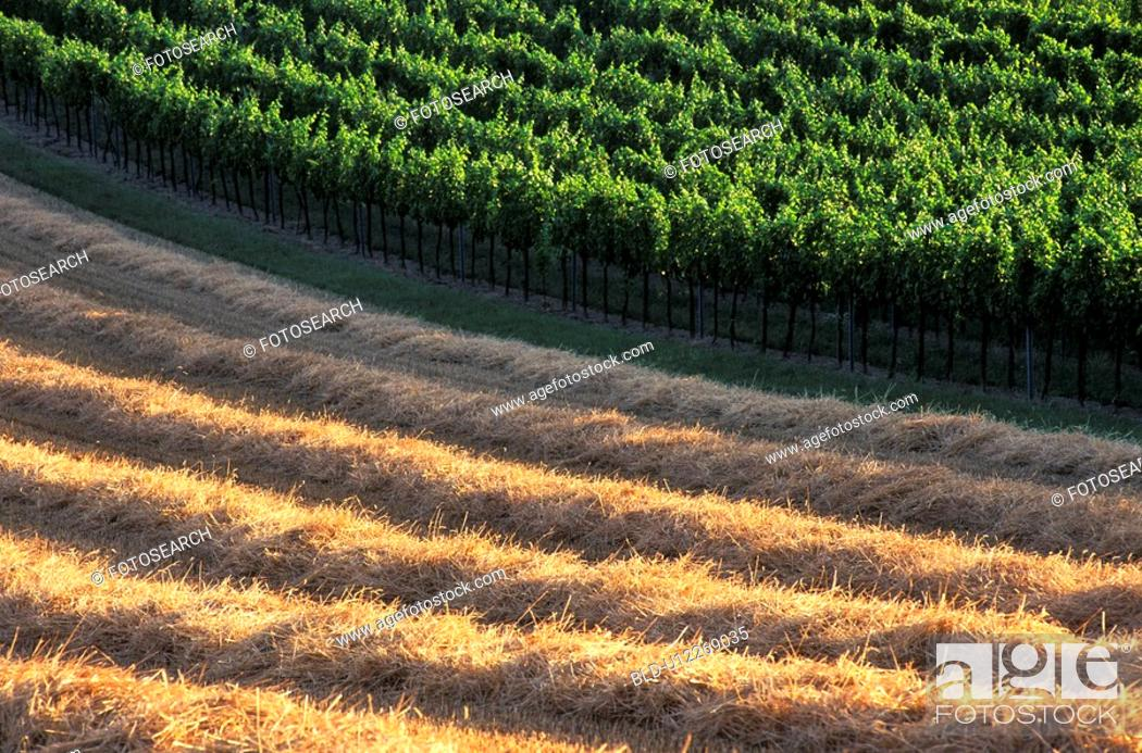 Stock Photo: Agricultural fields.