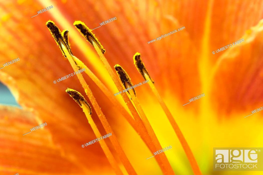 Stock Photo: Flower macro.
